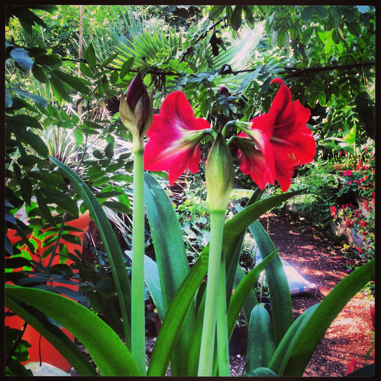 Que esta floreando ahora en Casa de las Flores BB Hotel Boutique ...