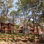 mazamitla-bosque